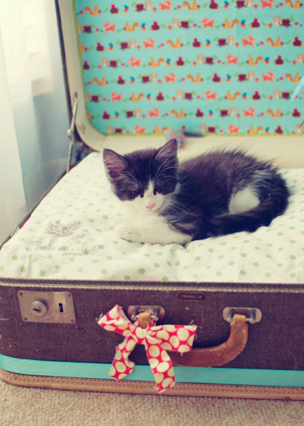 מיטת חתולים